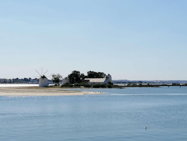 Molinos en la costa de Barreiro en un día despejado.